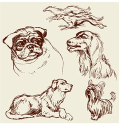 Set of dogs - labrador retriever hound pug setter vector