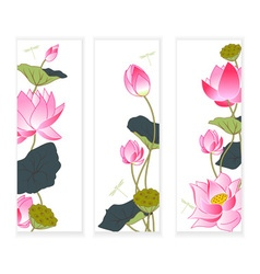 Blooming lotus vector image