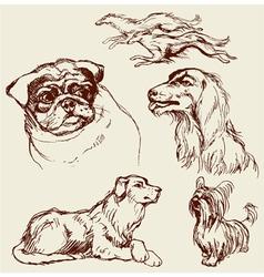 Set of dogs - labrador retriever hound pug setter vector