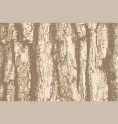Grunge background old bark tree texture vector