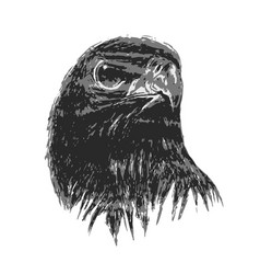 Eagle drawing in art vector