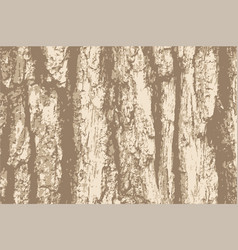 grunge background old bark tree texture vector image vector image