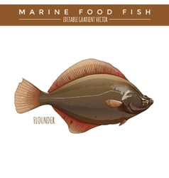 Flounder marine food fish vector