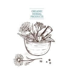 Hand drawn decorative flower basket vector