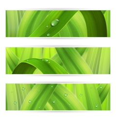 banners with grass vector image vector image