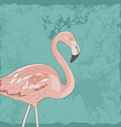 Flamingoakva2 vector