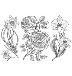 flowers set roses with leaves and buds and vector image
