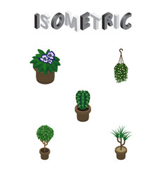 Isometric houseplant set of blossom tree vector