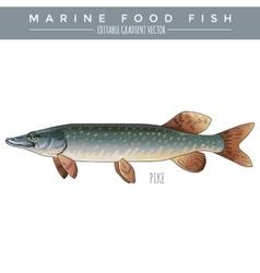 Pike marine food fish vector