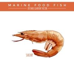 Cooked Shrimp Marine Food Fish vector image