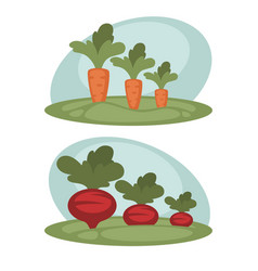 Carrot and beet growing vector