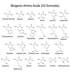 Twenty two bigenic amino acids vector