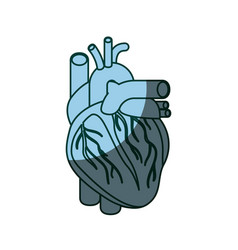 blue color shading silhouette heart system human vector image