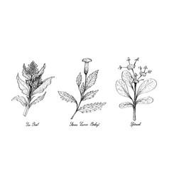 hand drawn of sea beet sierra leone bologi and sp vector image