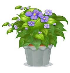 A plant with flowers vector