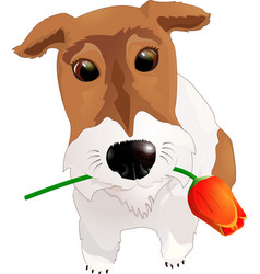 Dog congratulates with a flower vector