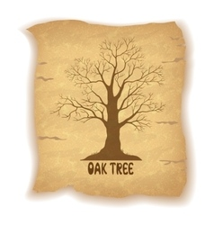 Oak leafless tree on old paper vector