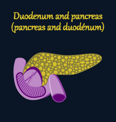 Human organ icon in flat style duodenum and vector