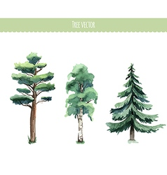Set of watercolor trees Birch pine fir-tree vector image