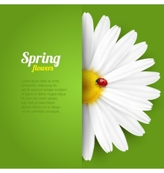 Spring flower in paper pocket vector