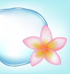 frangipani over water vector image