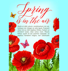 Spring poster of poppy flowers bloom vector