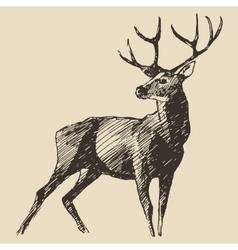 Deer Engraving Vintage vector image