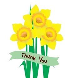 daffodil vector image