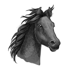 Artistic horse head sketch portrait vector