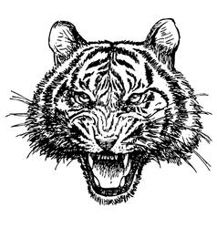Tiger 1 vector