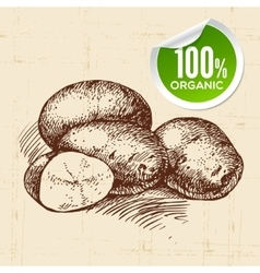 Hand drawn sketch vegetable potato eco food vector