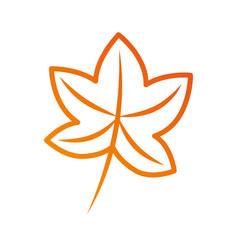 Autumn leaf maple foliage flora decoration vector