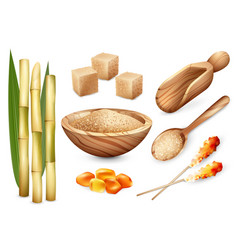cane sugar sweets set vector image