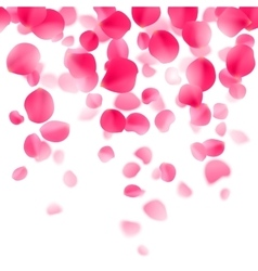 Red rose petals background vector