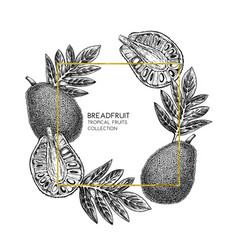 Breadfruit hand drawn vector