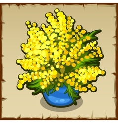 Bright yellow bouquet of mimosa in blue pot vector