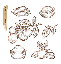Sketch of shea elements set of branches vector