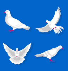 Graceful white pigeon stand and spreads wings vector