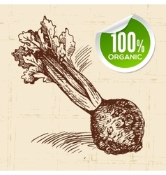 Hand drawn sketch vegetable celery eco food vector