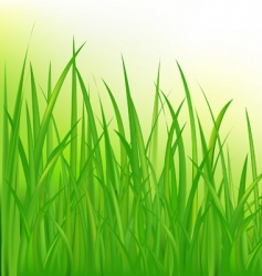 Long grass vector