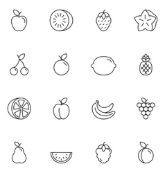 Fruits thin line icons vector