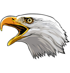 eagle head 4 vector image vector image