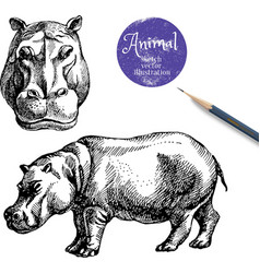 Hand drawn hippo animal sketch isolated hip vector