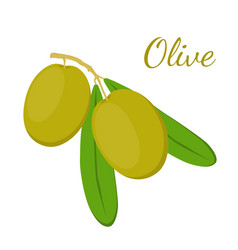 Olive branch olives cosmetics medical plant vector