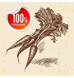 Hand drawn sketch vegetable carrots eco food vector