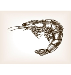 Shrimp hand drawn sketch style vector image vector image