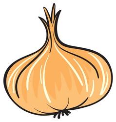 onion vector image