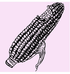 boiled corn vector image vector image