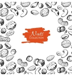 hand drawn nuts Engraved vector image vector image