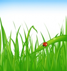 Grass with ladybird vector